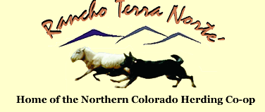 Northern Colorado Herding